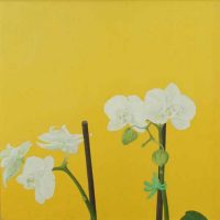 White Orchid by Janet Buckle