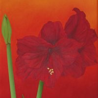 Amaryllis by Janet Buckle