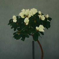 White Azalea by Janet Buckle