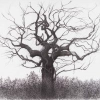 The Tree Richmond by Janet Buckle 7391
